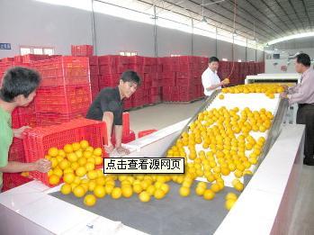 广西富川:特色农业